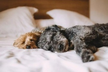 你睡觉的床如何成了细菌尘螨的温床